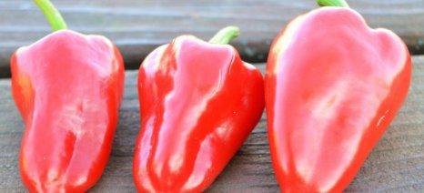 Ποιες τροφές μας χαρίζουν ένα δυνατό ανοσοποιητικό σύστημα