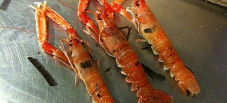 Απαγόρευση αλιείας καραβίδας στα υδάτινα οικοσυστήματα της Ηπείρου