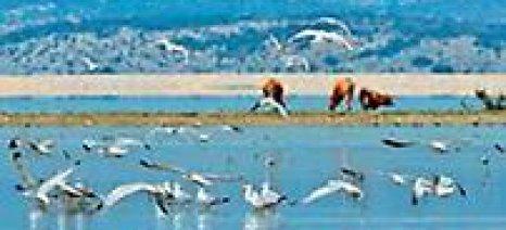 """Ημερίδα για την  """"Επαναδημιουργία της λίμνης Κάρλας"""""""