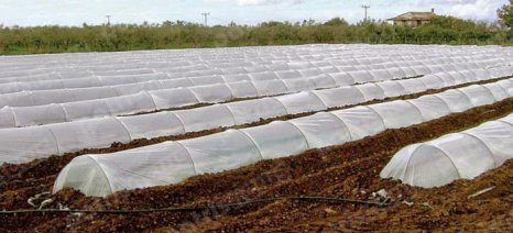 «Τζόγος» το καρπούζι – Η υπερπαραγωγή ανησυχεί τους αγρότες
