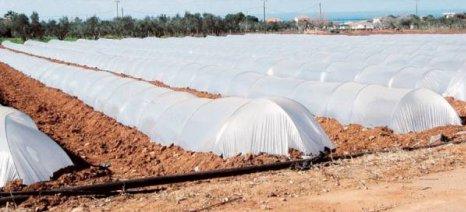 Σε πλήρη εξέλιξη η φύτευση καρπουζιών στην Τριφυλία