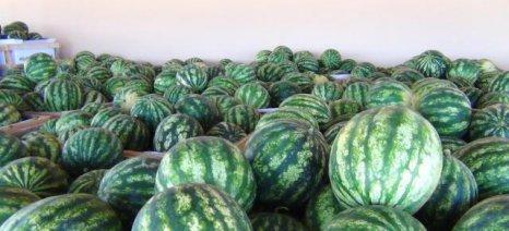 Ικανοποιητικές τιμές και καλοί ρυθμοί στις εξαγωγές των καρπουζιών της Τριφυλίας