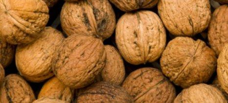 Έκλεψαν μισό τόνο καρύδια από αγρότισσα στον Τύρναβο