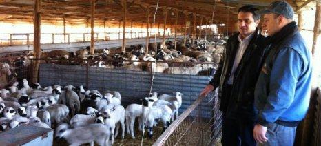 Στη Βουλή φέρνει ο Κασαπίδης τις ενισχύσεις για ανασύσταση ζωικού κεφαλαίου