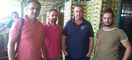 Κασαπίδης: Να ξεχωρίσει η Διεπαγγελματική Πυρηνόκαρπων την ήρα από το σιτάρι