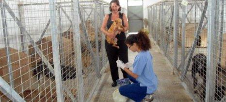 «Πόλεμος» με τις αλλαγές στον νόμο για τα ζώα συντροφιάς από τον Τσιρώνη