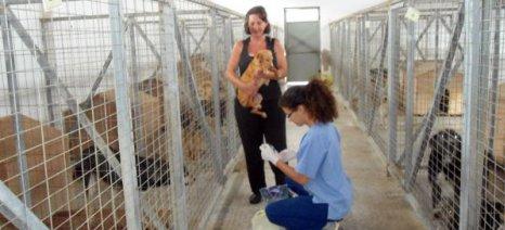 Δεύτερη παράταση για το σκέλος του προγράμματος «Φιλόδημος ΙΙ», που αφορά τα καταφύγια αδέσποτων ζώων, ζητά το ΥπΑΑΤ