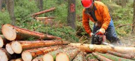 Τρίμηνη παράταση προσαρμογής των Δασικών Συνεταιρισμών και παραχώρησης δασικών εκτάσεων