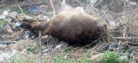 Οι αποφάσεις για το εθνικό πρόγραμμα συλλογής νεκρών ζώων