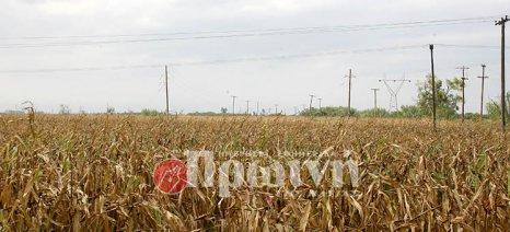 Πλημμύρισαν τα χωράφια με καλαμπόκια στο δήμο Ανδραβίδας-Κυλλήνης