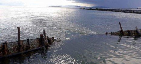 Εκτεταμένες καταστροφές στα φυσικά ιχθυοτροφεία της Λιμνοθάλασσας Μεσολογγίου