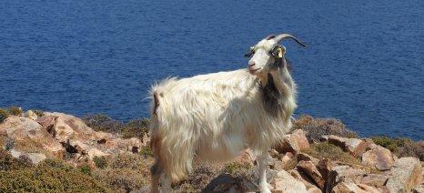 Ποιες είναι οι τρεις αλλαγές που ζήτησε η Ελλάδα από την Κομισιόν για τις ενισχύσεις των νησιών του Αιγαίου
