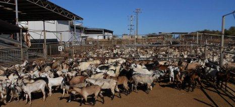 Η επιβολή ΦΠΑ 24% στα ζώντα ζώα ευνοεί τις εισαγωγές κρέατος, επισημαίνει ο Χαρακόπουλος