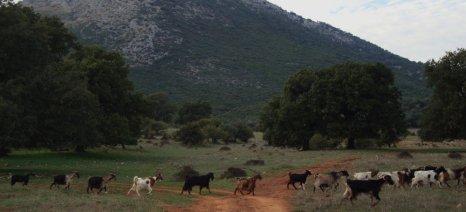 Η αποκεντρωμένη Θεσσαλίας-Στερεάς ακυρώνει αποφάσεις για κατανομές βοσκότοπων του δήμου Δελφών