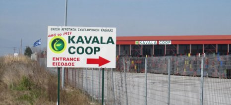 ΕΑΣ Καβάλας: Δυναμικό πρόγραμμα επενδύσεων σε νέες φυτεύσεις