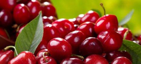 Αυξάνεται η διείσδυση των ελληνικών φρούτων στη ρουμανική αγορά