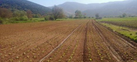 Κερδισμένοι οι αγρότες και όσοι έχουν παιδιά από τη νέα κυβερνητική πρόταση για τη φορολογία εισοδημάτων