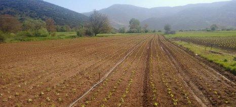 Δείτε πώς πρέπει να είναι το ενοικιαστήριο συμβόλαιο για τα χωράφια, σύμφωνα με τον ΟΠΕΚΕΠΕ