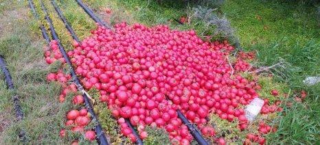 Μετά το ελαιόλαδο πλήττεται και η παραγωγή κηπευτικών της Κρήτης, σε απόγνωση οι παραγωγοί ζητούν στήριξη