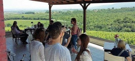 Μικρή αύξηση κατανάλωσης κρασιού αναμένουν οι οινοποιοί της Βόρειας Ελλάδας