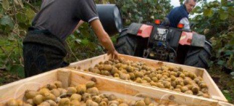 Τροποποίηση του Πρωτοκόλλου Φυτοϋγειονομικών Απαιτήσεων για την εξαγωγή ακτινιδίων στην Κίνα