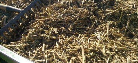 Δωρεάν παροχή συμβουλευτικών υπηρεσιών για διαχείριση βιομάζας από υπολείμματα κλαδέματος