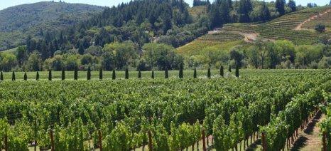 Τσιρώνης: Ο γεωργικός τομέας έχει να ωφεληθεί από την χρήση καθαρής ενέργειας