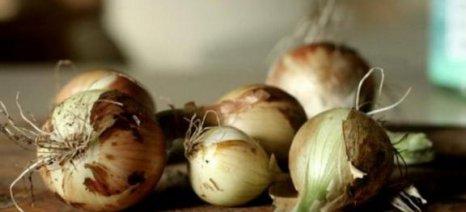 Σβήνει η καλλιέργεια για το κοκκάρι Αλμωπίας