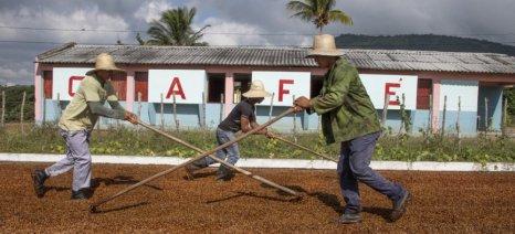 Πρόγραμμα στήριξης των Κουβανών καλλιεργητών καφέ από τη Lavazza