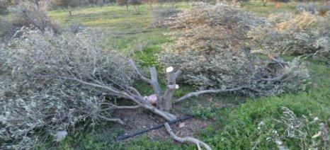 Του έκανε παρατήρηση για την καταπάτηση της γης του κι αυτός του…έκοψε σύριζα όλα τα δέντρα!