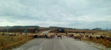 """""""Σβήνει"""" η κτηνοτροφία από το Γλυκονέρι, το κατ' εξοχήν κτηνοτροφικό χωριό της Ροδόπης"""