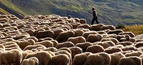 Μέτρα για την αντιμετώπιση της επέκτασης της ευλογιάς των προβάτων από τη Λέσβο στην Ανατολική Μακεδονία