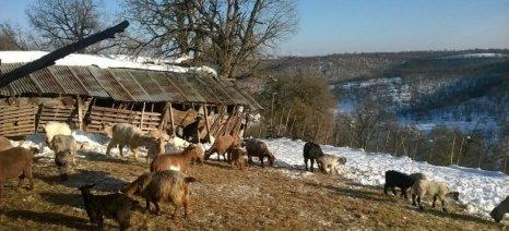 Καταστράφηκαν 8 ποιμνιοστάσια από τον δυνατό αέρα στην Ορεινή Σερρών