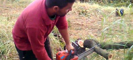 Οι αγρότες δεν αντέχουν και κόβουν τα δέντρα τους: Αιτία οι χαμηλές τιμές στο ροδάκινο
