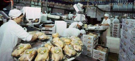 Στα σκαριά Διεπαγγελματική Οργάνωση για το κοτόπουλο
