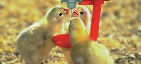 Άνθισε η ευρωπαϊκή πτηνοτροφία λόγω της μείωσης του κόστους των ζωοτροφών