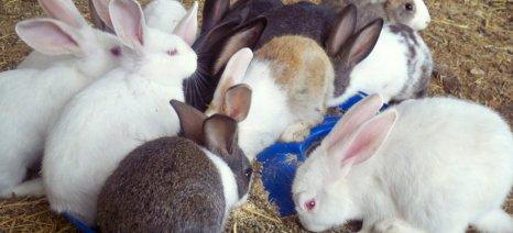 Κουνέλια, αρνιά και ελαιοραβδιστικά η λεία κλεφτών στην Ιεράπετρα