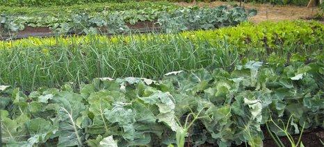 Κρατικές ενισχύσεις των αγροτών που έχουν πληγεί από θεομηνίες το 2018
