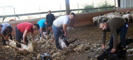 Γιορτή Κουράς στον Δήμο Αχαρνών στις 3 Ιουνίου