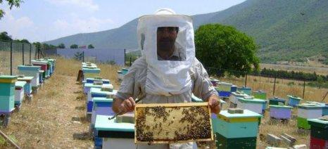 Το μέλι της Κοζάνης ταξιδεύει για πρώτη φορά στο εξωτερικό