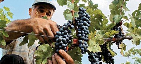 Σε διαβούλευση μέτρα για τον οίνο και τις κρατικές ενισχύσεις στον γεωργικό τομέα από την Κομισιόν