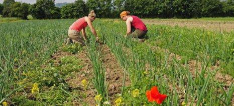 Γερμανία: Κρατικές ενισχύσεις για βιοκαλλιεργητές ζητούν οι Πράσινοι βουλευτές