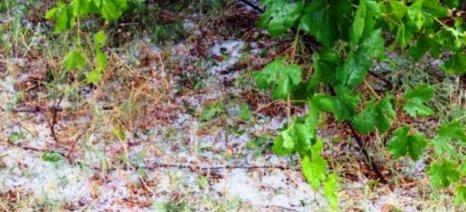 Κρήτη: Έφτασαν τις 9000 οι δηλώσεις για τις ζημιές στις καλλιέργειες από τις καταιγίδες του Αυγούστου