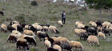 Καβάλα: Καταστάσεις πληρωμής για «Βιολογική Κτηνοτροφία»