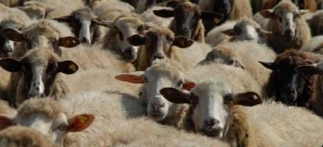 Προσλήψεις 20 κτηνιάτρων σε Διευθύνσεις Κτηνιατρικών Κέντρων. Αιτήσεις από 2 έως 13/7