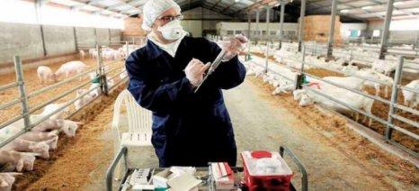 Κτηνίατρο εκτροφής συμπληρωματικό της Δημόσιας Κτηνιατρικής ζητά ο ΣΕΚ