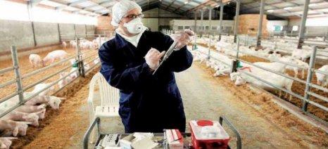 Νέο πρόγραμμα ενισχύσεων για εξυγίανση ζωικού κεφαλαίου