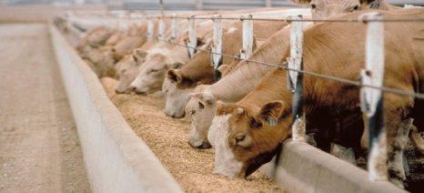 ΣΕΒΙΖ: Σοβαρό πλήγμα στην κτηνοτροφία από το capital control
