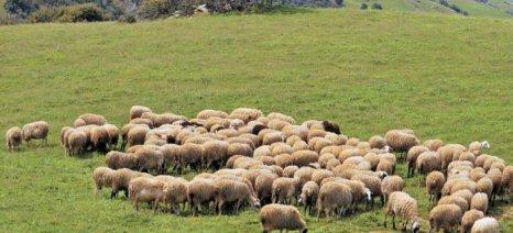 Ενισχύσεις de minimis ύψους 2,1 εκατ. ευρώ σε κτηνοτρόφους - βγήκε η απόφαση