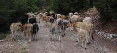 """""""Έγκλημα"""" η κατανομή της εξισωτικής του 2016 για την ορεινή κτηνοτροφία, σύμφωνα με το Σύλλογο Κτηνοτρόφων Αργιθέας"""